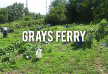 graysferry