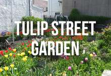 tulip_street